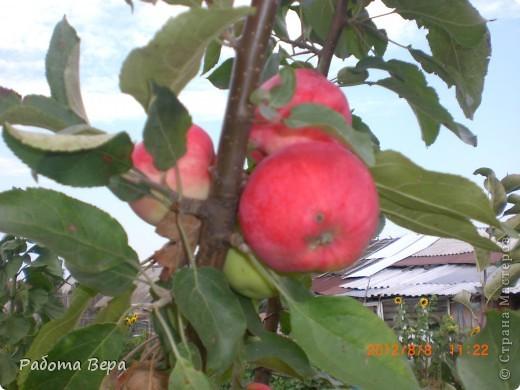 Здравствуйте все мастера и мастерицы! Приглашаю вас прогуляться по саду. Все фрукты спеют, вокруг красота! Всё это, мы с моим супругом вырастили сами. Желаю всем приятного просмотра, хорошего настроения!                                                                      фото 5