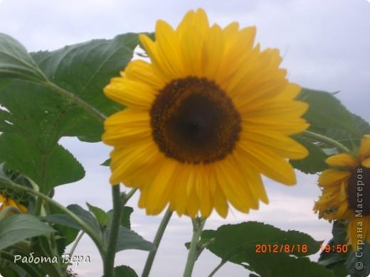 Фоторепортаж мой сад огород фото 4