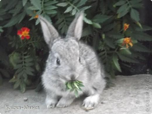 """Сегодня такой день чудесный у моего папы день рождение.Сделала фотоссесию своего """"муни"""" кролика и не только.Смотрите и оцените....  фото 2"""