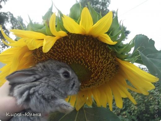 """Сегодня такой день чудесный у моего папы день рождение.Сделала фотоссесию своего """"муни"""" кролика и не только.Смотрите и оцените....  фото 3"""