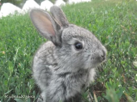 """Сегодня такой день чудесный у моего папы день рождение.Сделала фотоссесию своего """"муни"""" кролика и не только.Смотрите и оцените....  фото 1"""