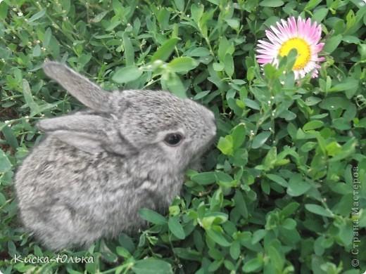 """Сегодня такой день чудесный у моего папы день рождение.Сделала фотоссесию своего """"муни"""" кролика и не только.Смотрите и оцените....  фото 4"""