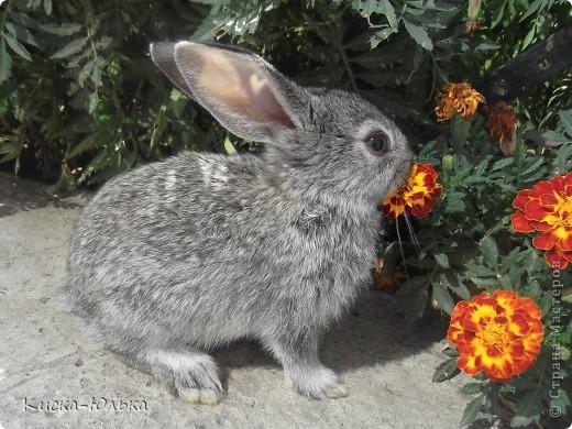 """Сегодня такой день чудесный у моего папы день рождение.Сделала фотоссесию своего """"муни"""" кролика и не только.Смотрите и оцените....  фото 12"""