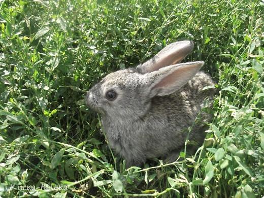 """Сегодня такой день чудесный у моего папы день рождение.Сделала фотоссесию своего """"муни"""" кролика и не только.Смотрите и оцените....  фото 13"""