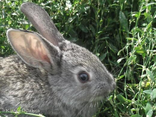 """Сегодня такой день чудесный у моего папы день рождение.Сделала фотоссесию своего """"муни"""" кролика и не только.Смотрите и оцените....  фото 14"""