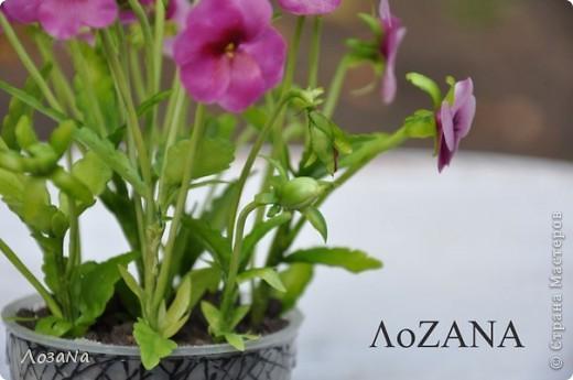 """У доченьки в игрушках нашла ма-ахонький горшочек, решила """"посадить"""" туда малюсенькие цветочки - вот что получилось))) фото 2"""