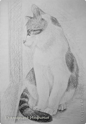 Я та ещё кошатница.. Решила нарисовать Тишу. Обожаемая мной шкодница!:) фото 1