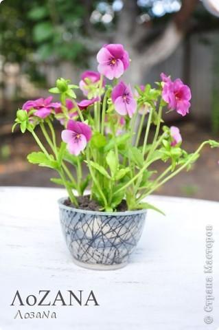 """У доченьки в игрушках нашла ма-ахонький горшочек, решила """"посадить"""" туда малюсенькие цветочки - вот что получилось))) фото 3"""