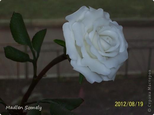 Розочка в подарок фото 2