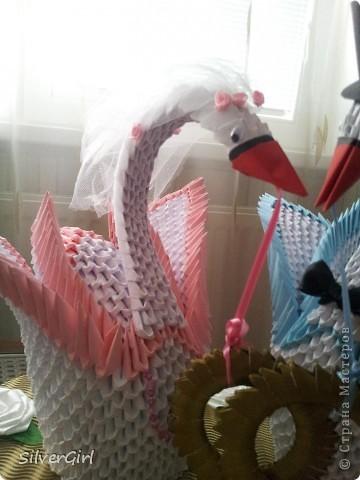 Лебеди - жених и невеста фото 3