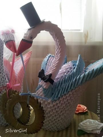 Лебеди - жених и невеста фото 4