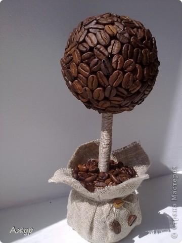 Мой первый кофейный топиарий