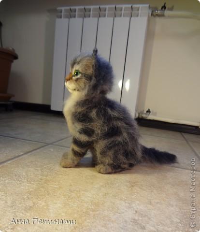 """Котик""""Кныш""""...Сделан на заказ по мотивам """"Тигги"""" фото 5"""