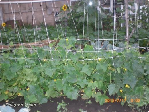 Мой сад огород поиск мастер классов