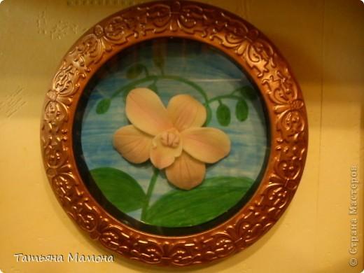 Розовый фаленопсис фото 2
