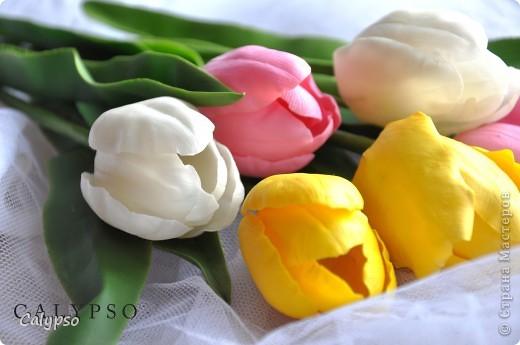 Мои самые первые тюльпаны) фото 1