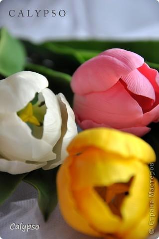 Мои самые первые тюльпаны) фото 2