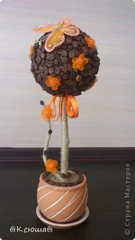 Добрый день!!!! Сегодня я с новым кофейным деревцем. Все мои кофейные деревья нашли себе хозяев, теперь вот хочется сделать ещё какие нибудь. Вот такое получилось за выходные!!! фото 1