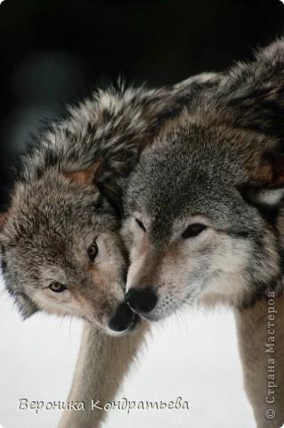 Уши волка своими руками