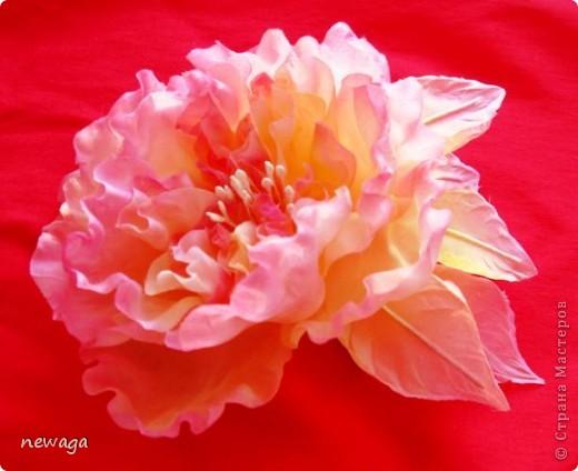 """Роза """"Фантаглория"""" фото 1"""