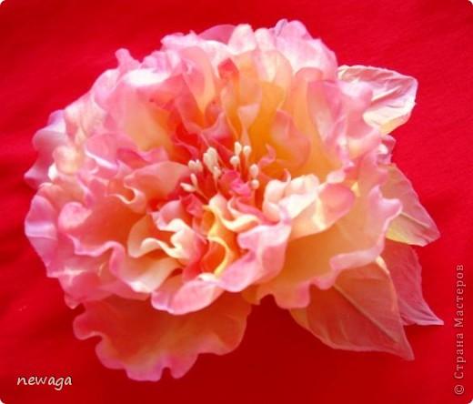 """Роза """"Фантаглория"""" фото 2"""