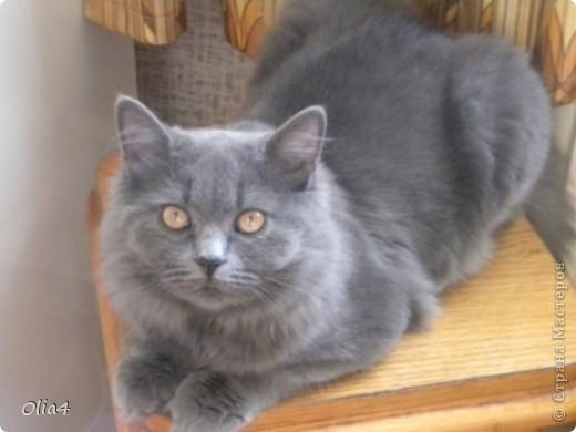 Кошка-подушка фото 2