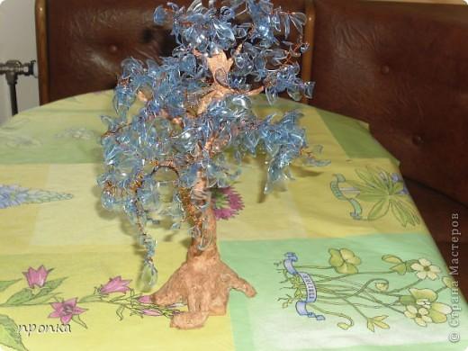 Мои первые деревца фото 1