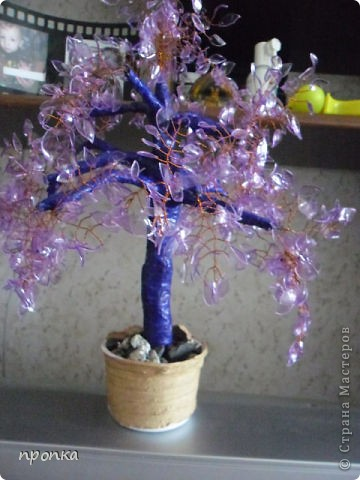 Мои первые деревца фото 3