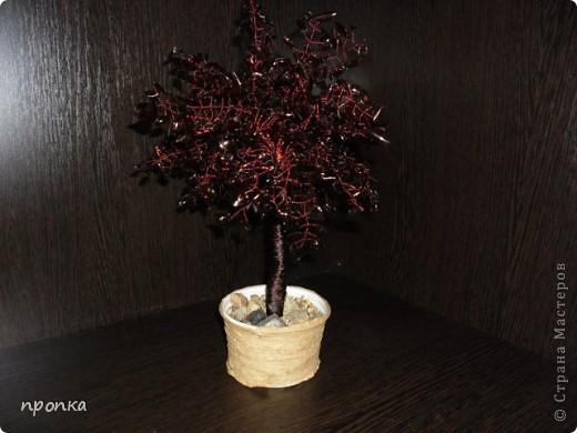 Мои первые деревца фото 5