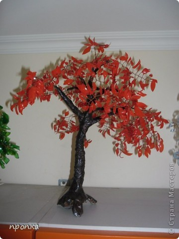 Мои первые деревца фото 4