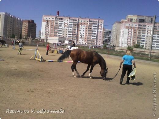 """Я где-то пол года назад пошла на конный спорт, и там есть такой коняшка по имени """"Араб"""". Арабской породы.) Один из моих любимчиков. Ну вот недавно сходила я на конюшню и сфотографировала Араба. К сожалению фоточка не очень, и рисовать трудно из далека. А приблизишь так вообще ничего не видно =(  фото 1"""