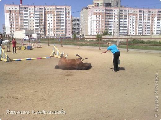 """Я где-то пол года назад пошла на конный спорт, и там есть такой коняшка по имени """"Араб"""". Арабской породы.) Один из моих любимчиков. Ну вот недавно сходила я на конюшню и сфотографировала Араба. К сожалению фоточка не очень, и рисовать трудно из далека. А приблизишь так вообще ничего не видно =(  фото 5"""