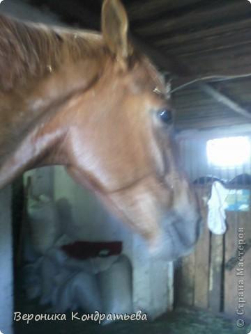 """Я где-то пол года назад пошла на конный спорт, и там есть такой коняшка по имени """"Араб"""". Арабской породы.) Один из моих любимчиков. Ну вот недавно сходила я на конюшню и сфотографировала Араба. К сожалению фоточка не очень, и рисовать трудно из далека. А приблизишь так вообще ничего не видно =(  фото 3"""
