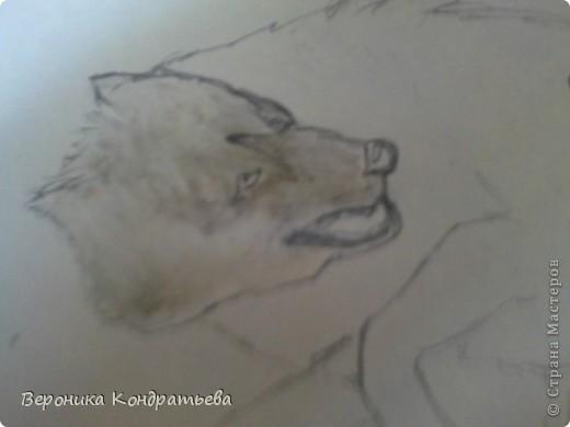 Попробуем нарисовать вот таких волков гуашью?  У меня это первый эксперимент, не судите строго...) В этой картине я немного поиграю с положением хвостов, ну и немного лап.) фото 9