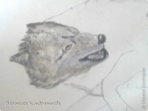 Попробуем нарисовать вот таких волков гуашью?  У меня это первый эксперимент, не судите строго...) В этой картине я немного поиграю с положением хвостов, ну и немного лап.) фото 12