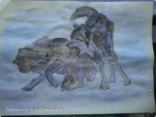 Попробуем нарисовать вот таких волков гуашью?  У меня это первый эксперимент, не судите строго...) В этой картине я немного поиграю с положением хвостов, ну и немного лап.) фото 31
