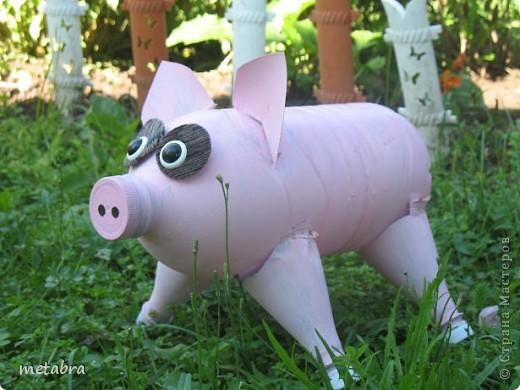Вот такая поросюшка появилась и на моем огороде! Жаль, что только к концу лета... фото 4