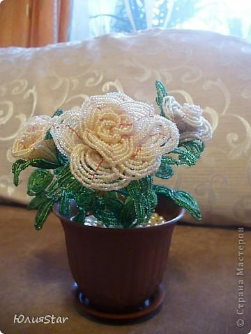 Эта была первая роза . а потом уже сложился букет... фото 3