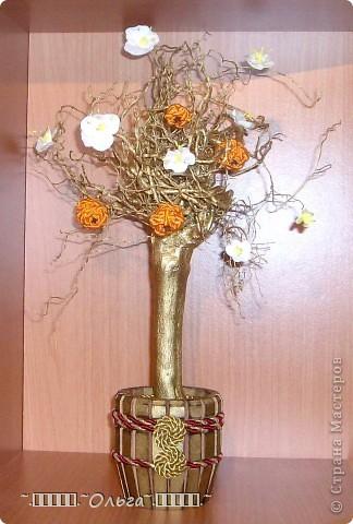 Как я мандариновое деревце соорудила... фото 1
