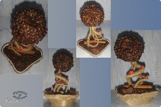 вот такой кофейный бонсайчик получился... фото 1
