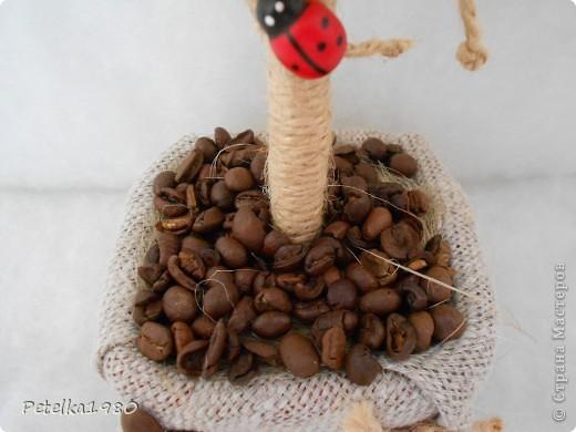 Кофейное дерево №11 фото 2