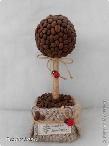 Кофейное дерево №11 фото 3