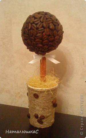 вот и у меня выросло кофейное дерево.....
