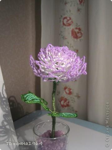 Поделка изделие День рождения Бисероплетение Хризантема из бисера Бисер фото 1.