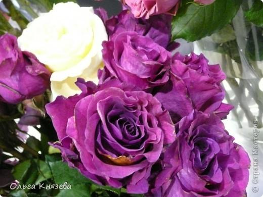 Здесь будут, в основном,  розы фото 1