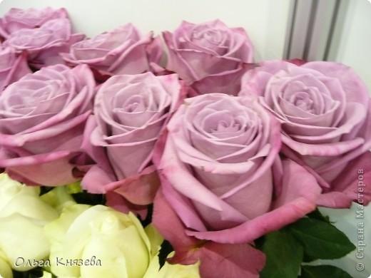 Здесь будут, в основном,  розы фото 2
