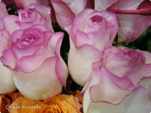 Здесь будут, в основном,  розы фото 4