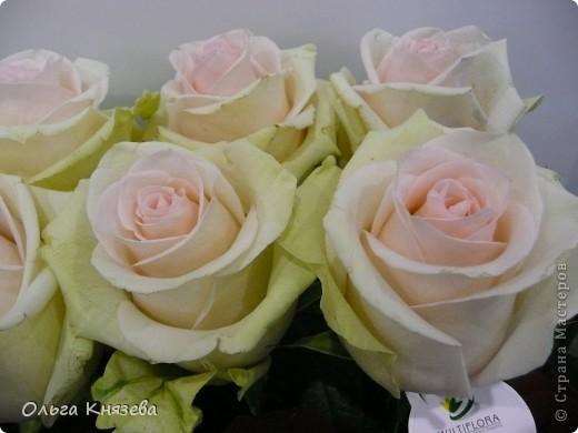 Здесь будут, в основном,  розы фото 5