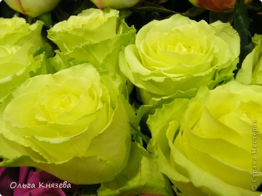 Здесь будут, в основном,  розы фото 6