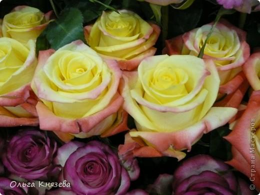 Здесь будут, в основном,  розы фото 8